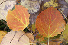 Leaves_signpost